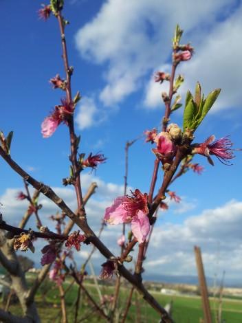 I de nou, la Primavera...
