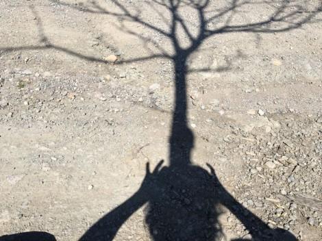 Dona-arbre